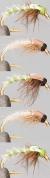 Plankton/Kleinstmücken